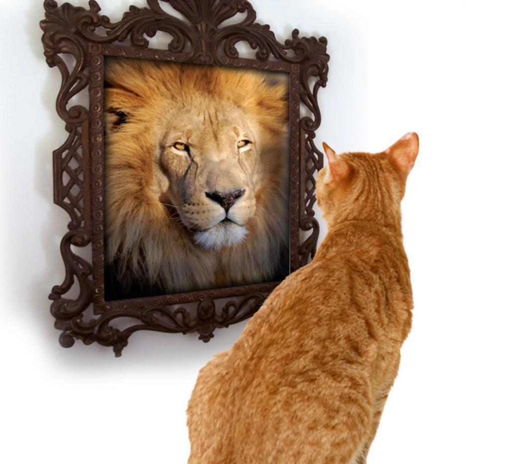 очень картинка кот в зеркале лев его